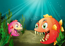 A small and a big fish. Illustration of a small and a big fish Stock Images
