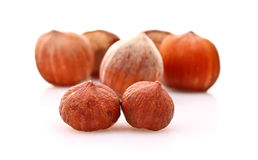Small and big Hazelnuts Stock Images