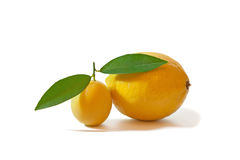 Small and big lemons  on white. Small and big lemons with leaves  on white background Stock Image