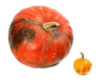 Small and big ripe pumpkins Stock Photos