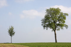Small and big tree Royalty Free Stock Photography