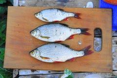 Small, bigger, even bigger. Fish is small, bigger, even bigger, fresh, caught one hour ago, ready to soup stock photo