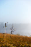 Small birch tree on foggy autumn morning Stock Image
