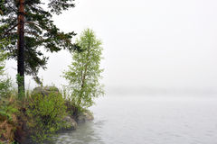 Small birch tree by sea in fog Royalty Free Stock Photography
