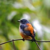 Small Bird. On green background Royalty Free Stock Photos