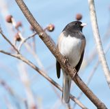 Small Bird. Perched on a branch in spring stock photography