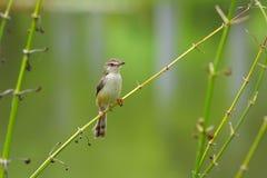 Small bird on branch Royalty Free Stock Photos