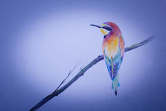 Small bird on branch. A small but very bright bird on a branch Stock Photography