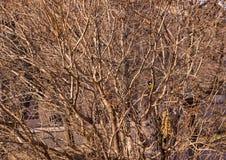 Small bird on branches Royalty Free Stock Photos