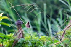 Small bird. Close focus of a small bird is standing on branch Stock Images