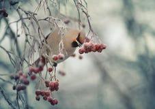 Small bird in the cold winter Stock Photos