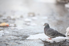 Small bird in the cold winter stock images