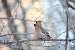 Small bird in the cold winter Stock Photography