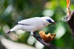 Small bird eating Royalty Free Stock Photo
