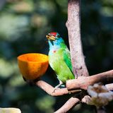 Small bird eating Stock Images