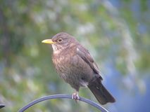 Small bird on fence stock photo