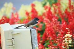 Bird in the garden Royalty Free Stock Photos