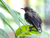 Small bird. With the green leaves Royalty Free Stock Image