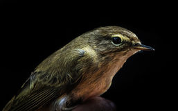 Small Bird. A hand in Zaragoza in Spain royalty free stock photography