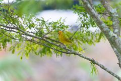 Small bird holding branch with the beak. To build a nest Stock Photos