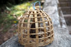 A small bird in natural cage for sell. In market Royalty Free Stock Images