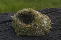 Small bird nest Royalty Free Stock Image