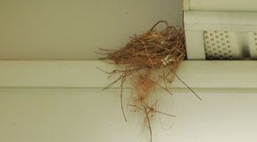 Bird nest in the gutters. Small bird nest built near the rain gutters of a house Royalty Free Stock Image