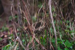Small bird nest hidden in shrubbery Stock Photos