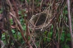 Small bird nest hidden in shrubbery Royalty Free Stock Image