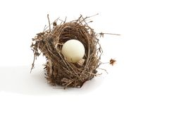 Small bird nest with ping-pong ball instead of egg Stock Image