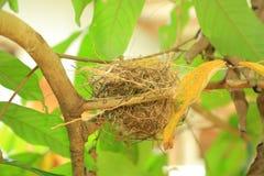 Small bird nest on tree stock image