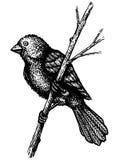 Small Bird On A Branch Stock Photos