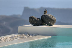Small bird over a stone on a swimming pool. Swimming pool on Santorini (Greece) with nice views over the caldera and small bird over decorative stones royalty free stock image