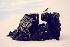Small bird perched on a tree trunk at the beach  royalty free stock photos