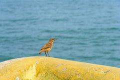 Small bird. Bird perched on yellow concrete bench Royalty Free Stock Photos