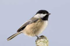 Small Bird Profile Perched Branch Stock Image