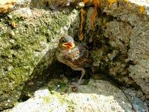Small bird on the rocks stock image