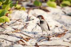 Small bird on sand Stock Photos