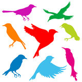 Small bird silhouette set Royalty Free Stock Images