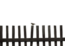 Small bird sits on a wooden fence Royalty Free Stock Image