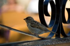 Small bird sitting on a fence stock images