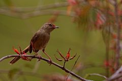 Small bird sitting on a tree Royalty Free Stock Photos