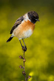 Small bird on a slim branch. With unfocused background Royalty Free Stock Photography