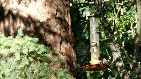 Small bird slomo. Small bird eating at feeder in slow motion stock video