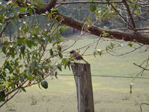 Small bird Stock Photos