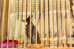 A small bird Royalty Free Stock Photo