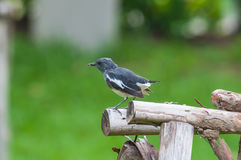 A small bird. On Timber Stock Photo