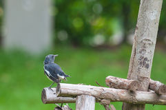 A small bird. On Timber Royalty Free Stock Photography
