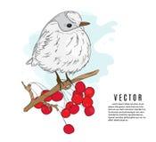 Small bird on a twig vector illustration. Nature botanical sketch. Winter holidays print. Little bird red viburnum tree royalty free illustration