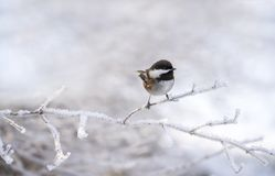 Small bird in winter royalty free stock images